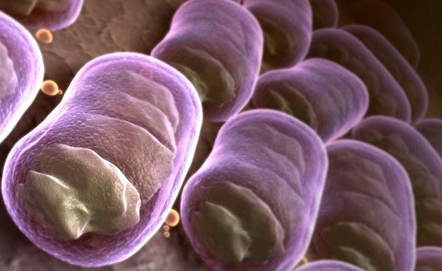 btw3b564e_bakterie