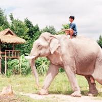 thajsko-0222_200_2001